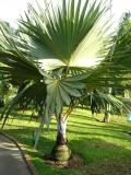 Paysagiste-palmier-jardin