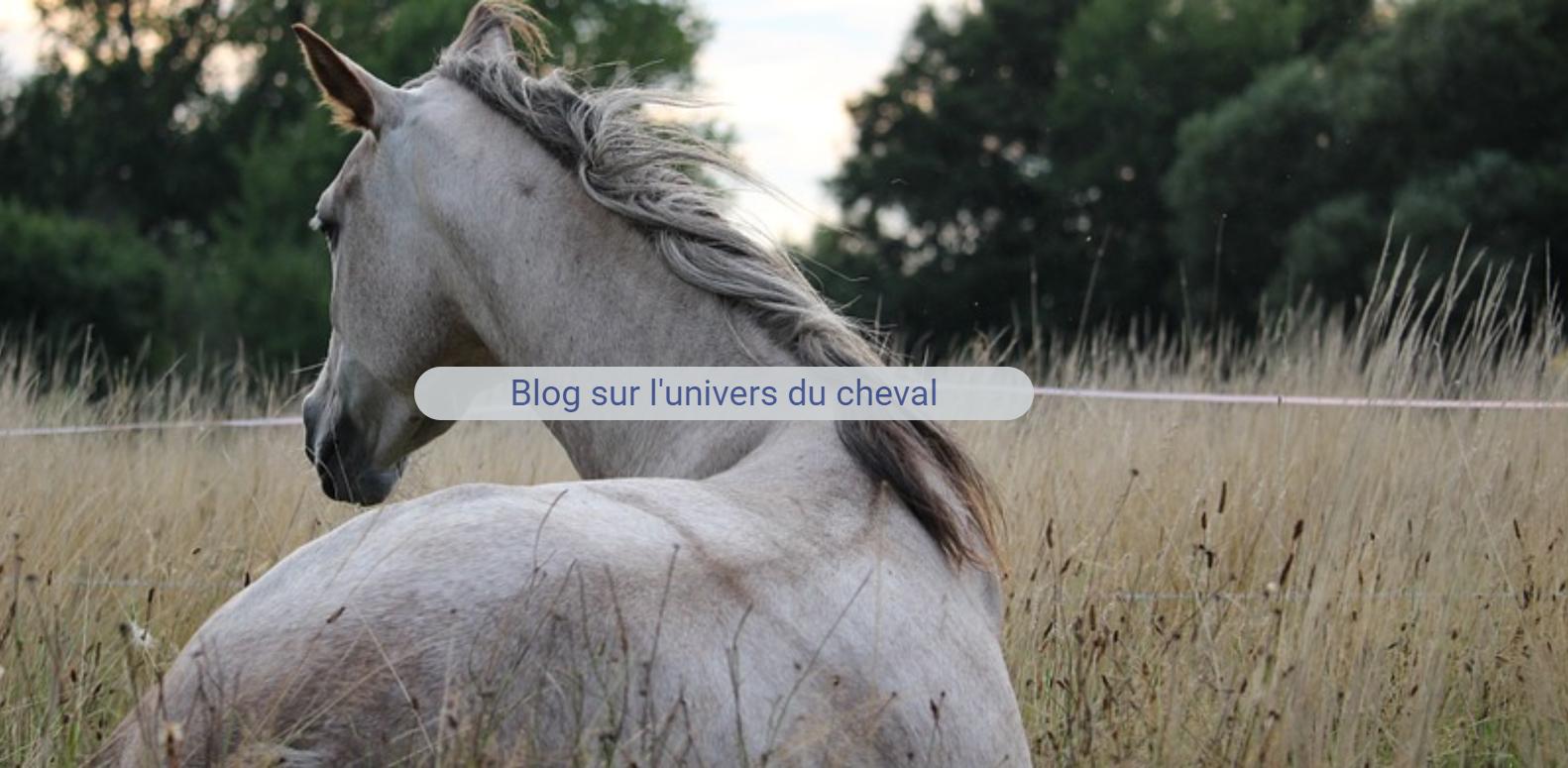 Annuaire des professionnels du cheval