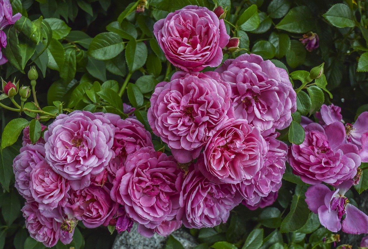 Astuces et conseils pour l'aménagement d'un jardin