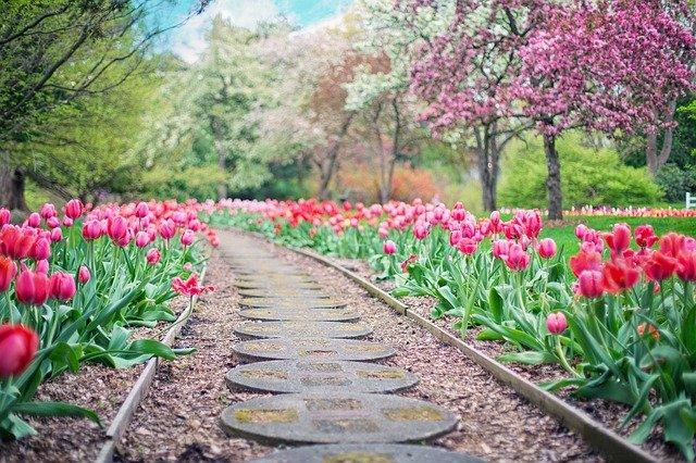 Conseils avisés et astuces pratiques sur le jardinage